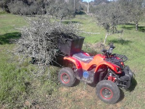 1000W adult electric quad bike, ATV, Fuseta, Algarve