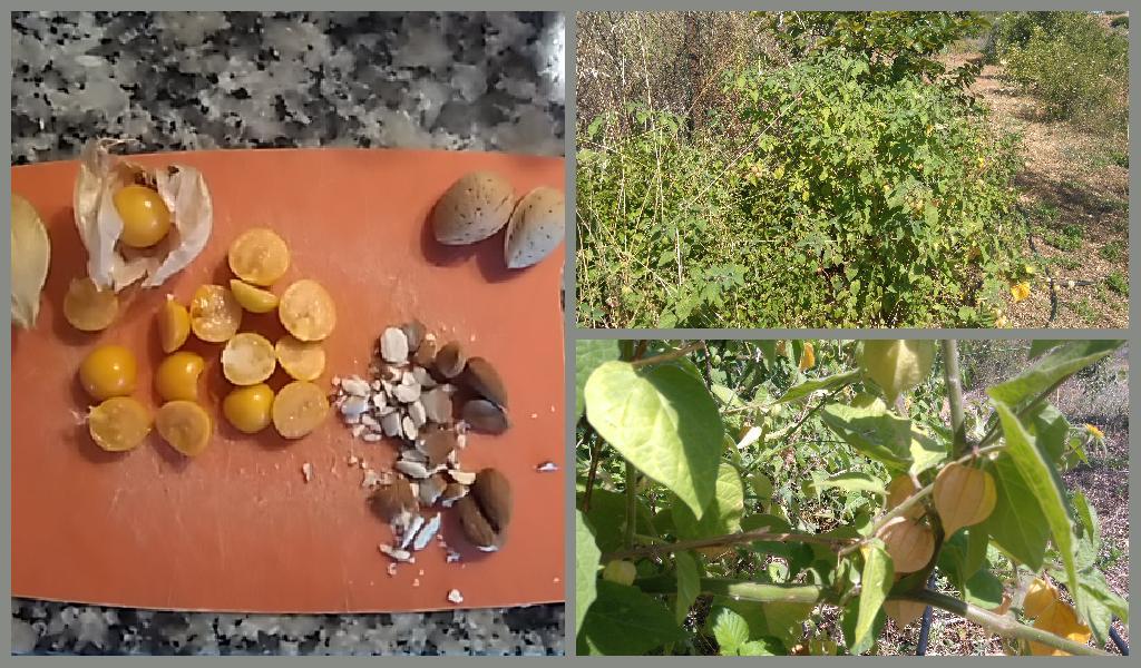physallis peruviana, cape gooseberry, almonds in porridge, Belnonte, Luz de Tavira, Algarve, Portugal
