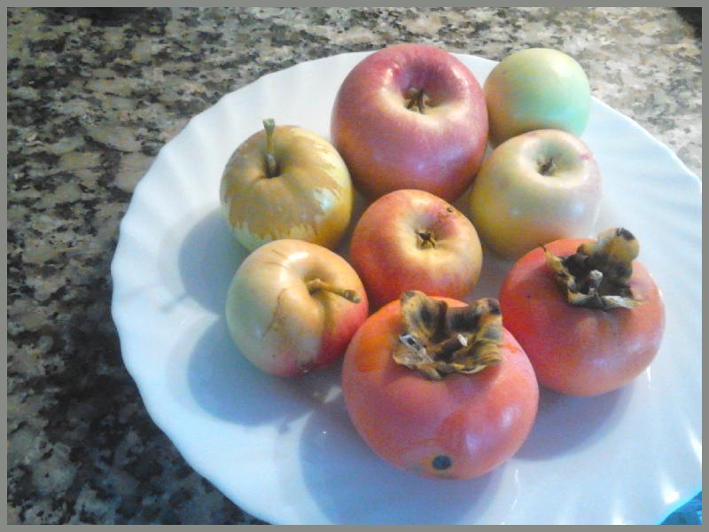 apples, kaki, persimmon, guavas, Belnonte, Luz de Tavira, Algarve