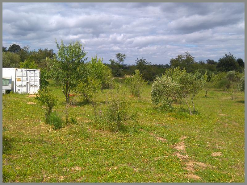 Portugal, East Algarve, Belmonte, amendoiras, oliverias , azeite, extra virgin olive oil