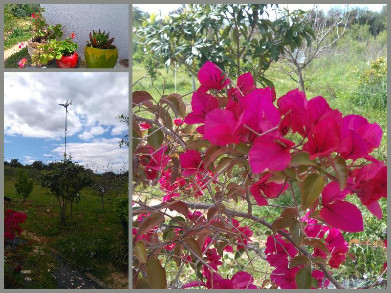 Spring 2020 Algarve, Portugal