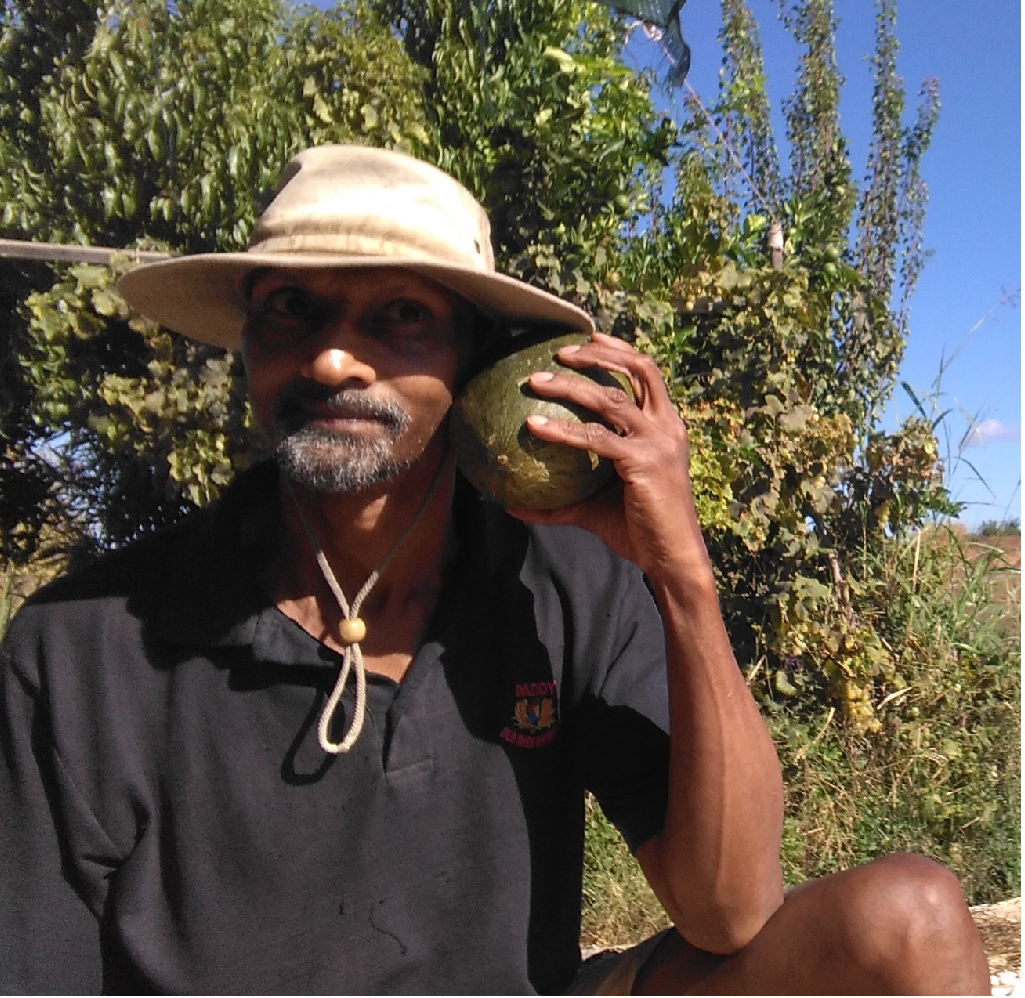 melão, melon, Belmonte, Luz de Tavira, Zephyr Rodrigues, Sustainable Living, Renewable Energy